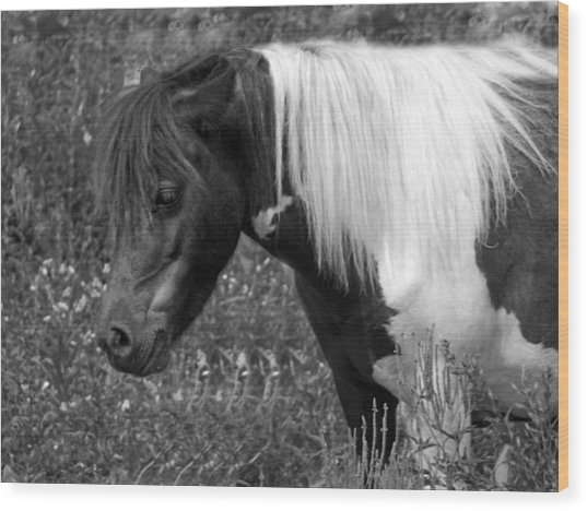 Spotted Pony Wood Print