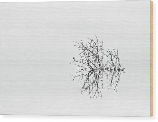 Sprawling Wood Print