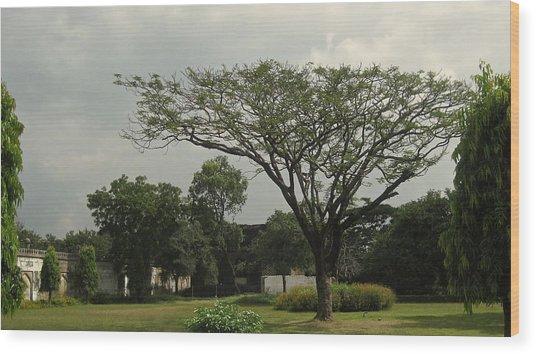 Spreading Tree Wood Print