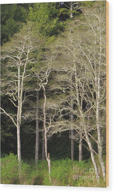 Spring Alders Wood Print by Frank Townsley