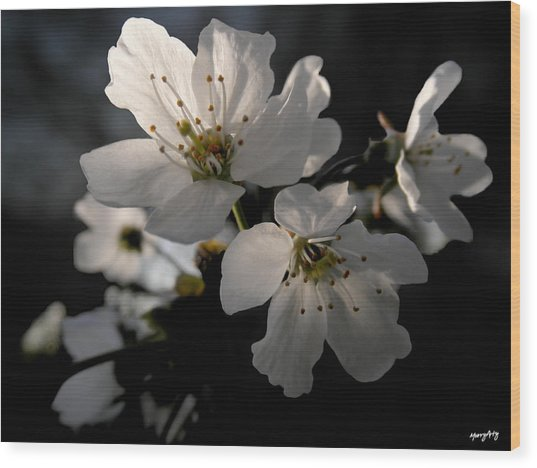Spring Emerging Wood Print