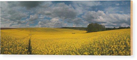 Spring At Oilseed Rape Field Wood Print
