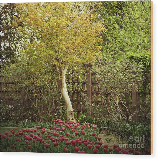 Tiptoe Thru The Tulips Wood Print