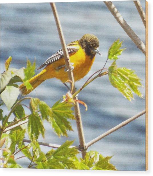 Spring Bird  Wood Print by Lisa Roy