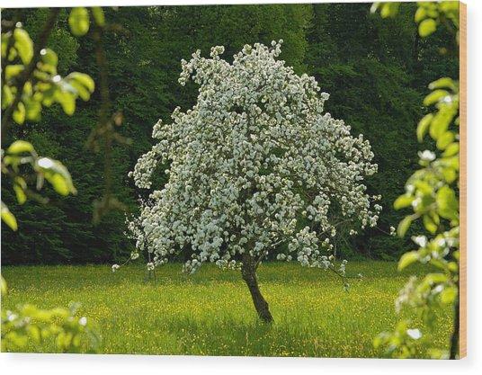 Spring - Blooming Apple Tree And Green Meadow Wood Print
