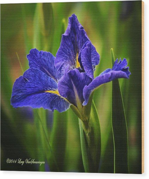 Spring Blue Iris Wood Print