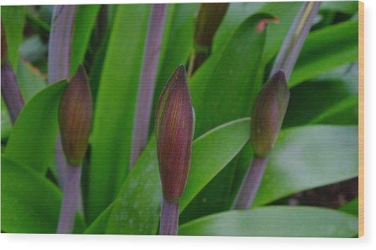 Spring Buds Amaryllis Wood Print