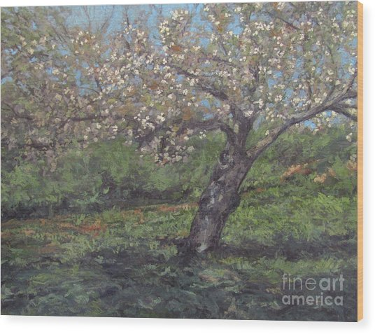 Spring Cherry Blossoms Wood Print by Gregory Arnett
