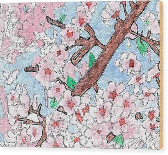 Spring Cherry Blossoms  Wood Print by Fred Hanna