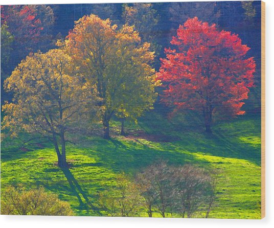 Spring Color Just Down The Road Wood Print by Alan Olansky