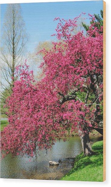 Spring Crabapple Wood Print