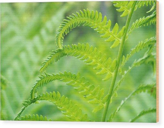 Spring Fern Wood Print