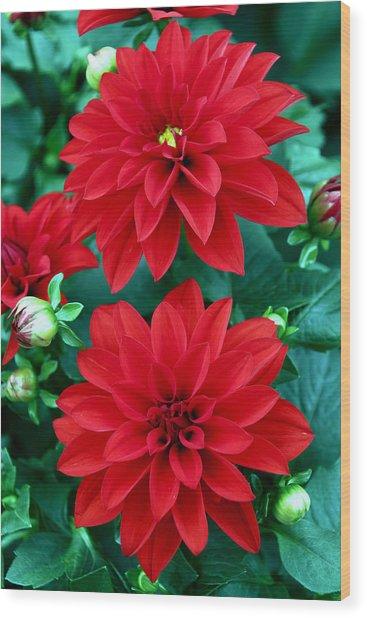 Spring Flowers 5 Wood Print