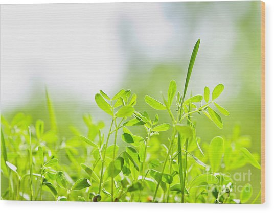 Spring Green Sprouts Wood Print