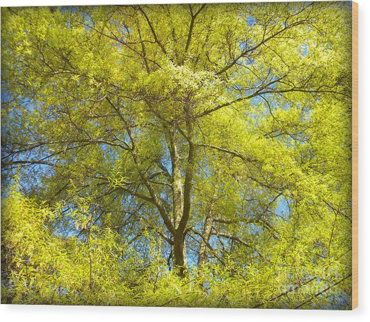Spring Greening Wood Print by Lorraine Heath