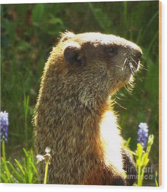 Spring Groundhog  Wood Print by Lisa Roy