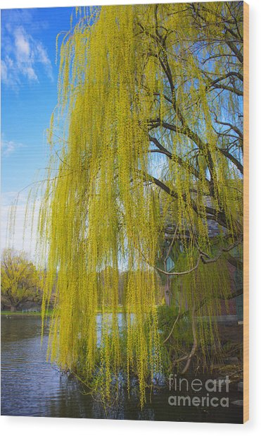 Spring In Central Park Nyc Wood Print