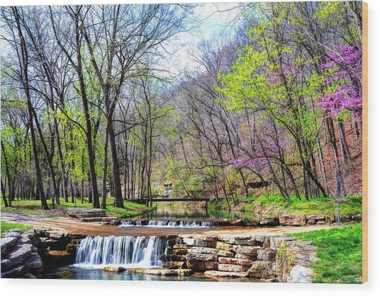 Spring In Dogwood Canyon Wood Print