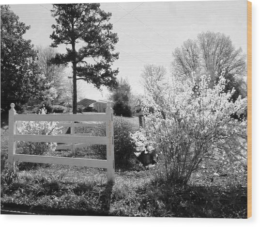 Spring In Martinsville Bw Wood Print