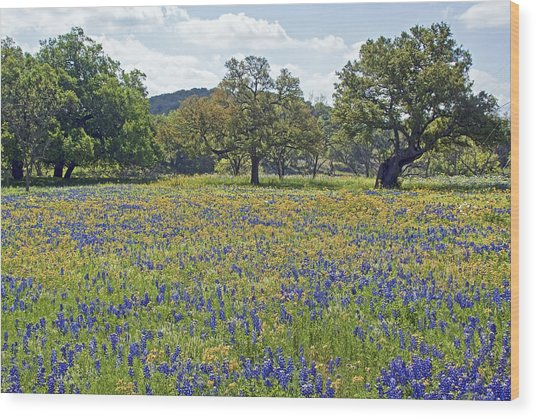 Spring In The Texas Hill Country Wood Print