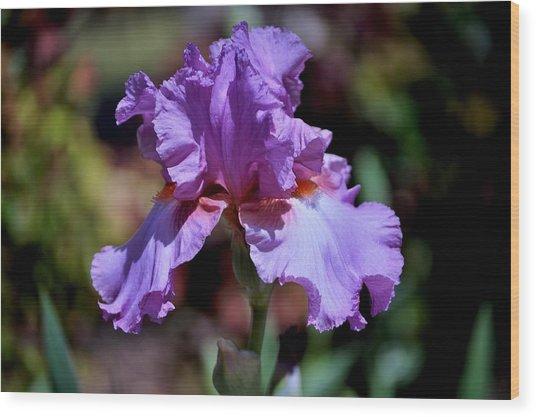 Spring Iris Bloom Wood Print