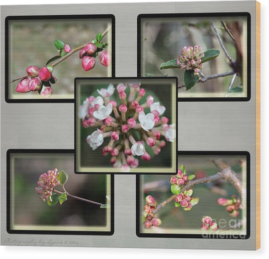 Spring Is Here - Gray Wood Print