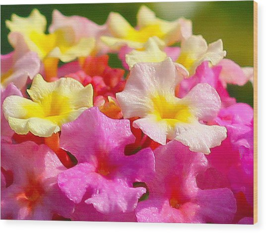 Spring Lantana Wood Print by James Hammen