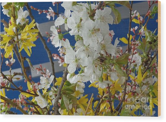 Spring Life In Still-life Wood Print