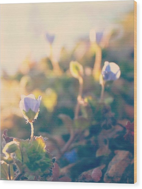 Spring Light And Wildflowers Wood Print