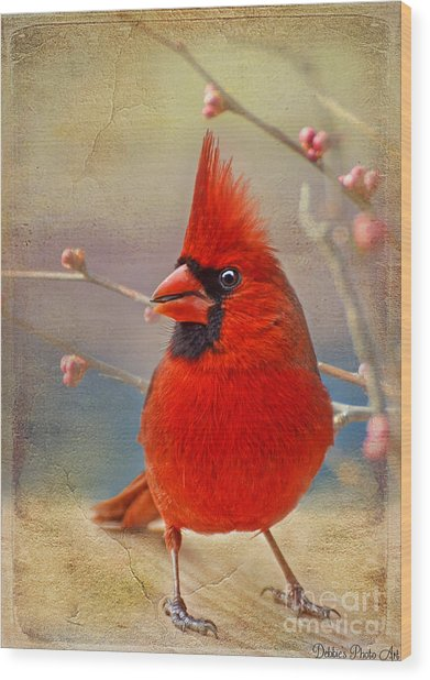 Spring Male Norther Cardinal Wood Print