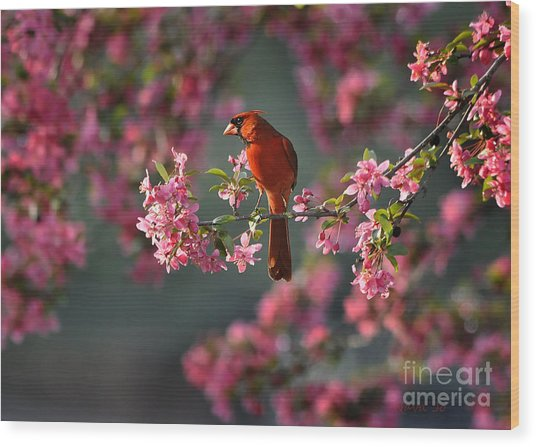 Spring Morning Cardinal Wood Print