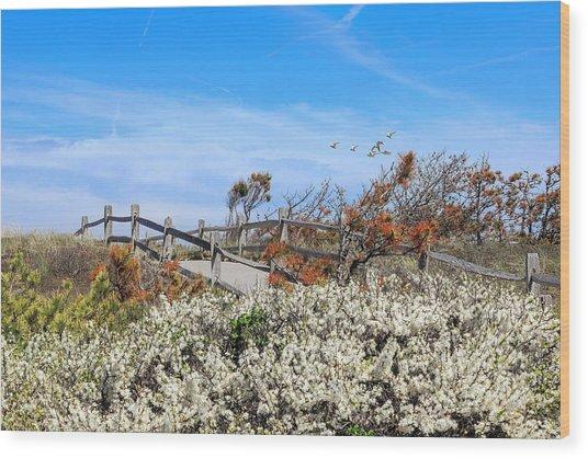 Spring On Cape Cod Wood Print