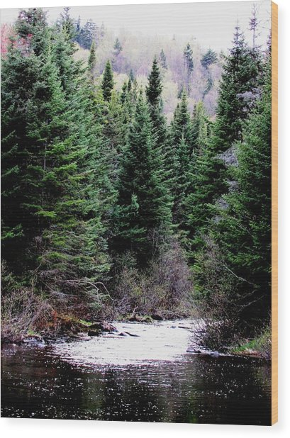 Spring On The Stream Wood Print by Will Boutin Photos