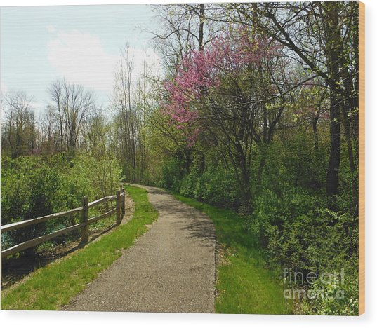Spring Path At Wedgewood Hills Park Wood Print