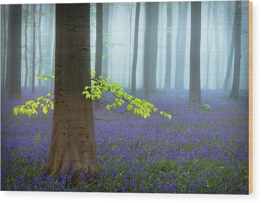 Spring........... Wood Print by Piet Haaksma