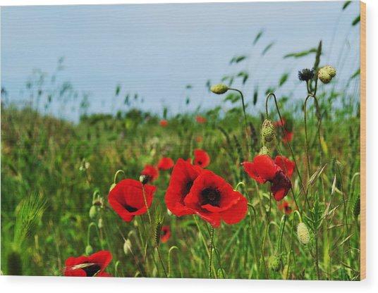 Spring Poppy Field Wood Print by Marina Slusar