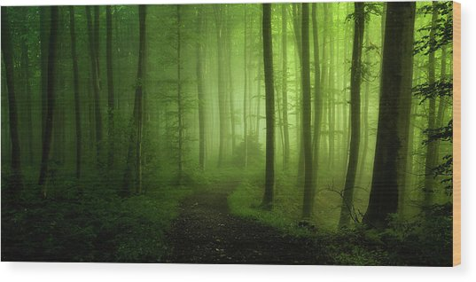 Spring Promise Wood Print by Norbert Maier