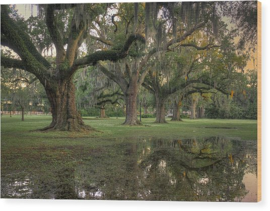 Spring Rain In New Orleans Wood Print