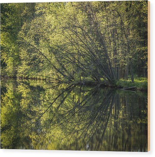 Spring Reflections Wood Print by Jeffrey Frazier