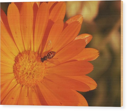 Flower And Bee Wood Print