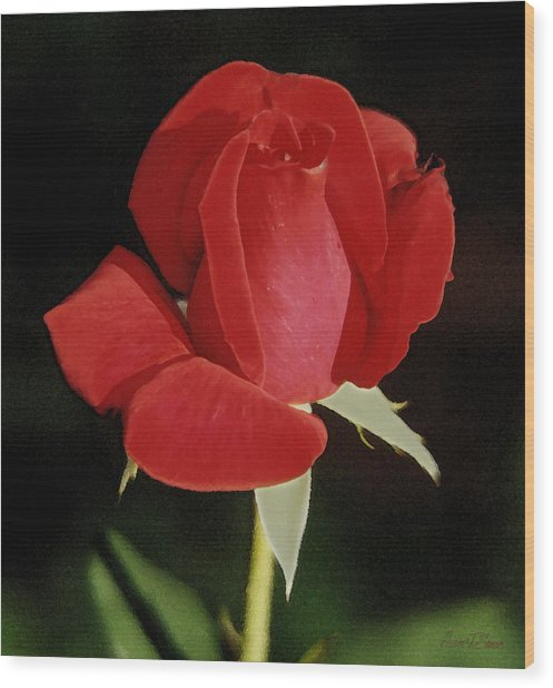 Spring Rose - Taos New Mexico Wood Print