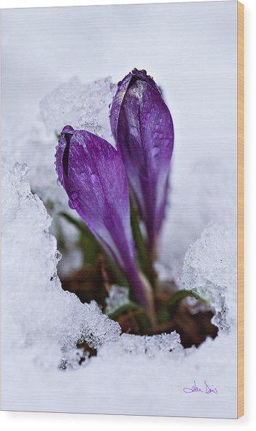 Spring Snow Wood Print
