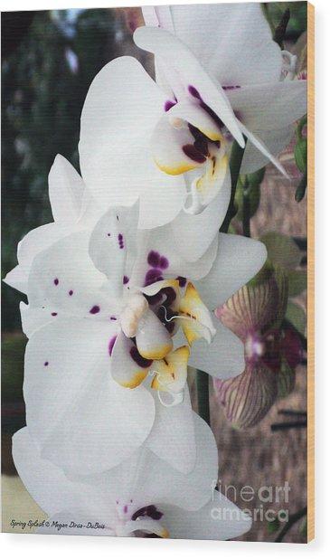 Spring Splash Orchid Wood Print