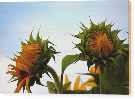 Spring Sun Shine Wood Print
