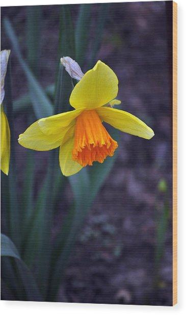Spring Time Wood Print by Larry Jones