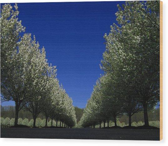 Spring Tunnel Wood Print
