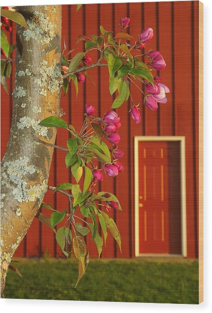 Wood Print featuring the photograph Spring by Viviana  Nadowski