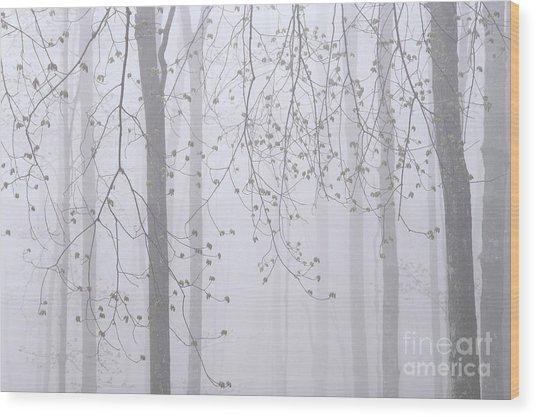 Spring Woodland Fog 2 Wood Print