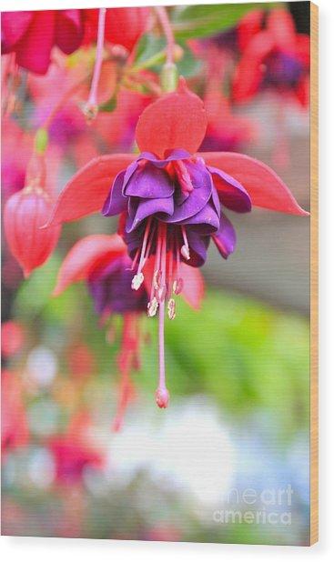 Springle Bells Wood Print