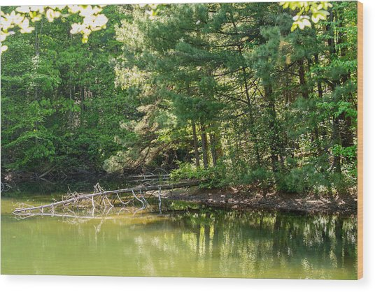 Springtime At Crystal Lake Wood Print by John Carroll
